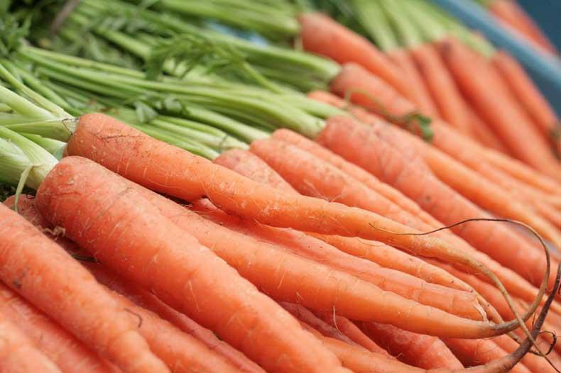 Carrots-1024x682