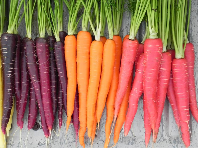 Carrot-Nutri-Red-Sugarsnax-Purplesnax