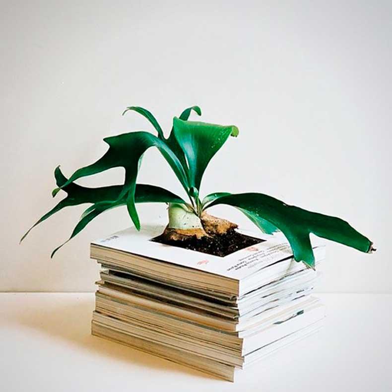 planter-holder