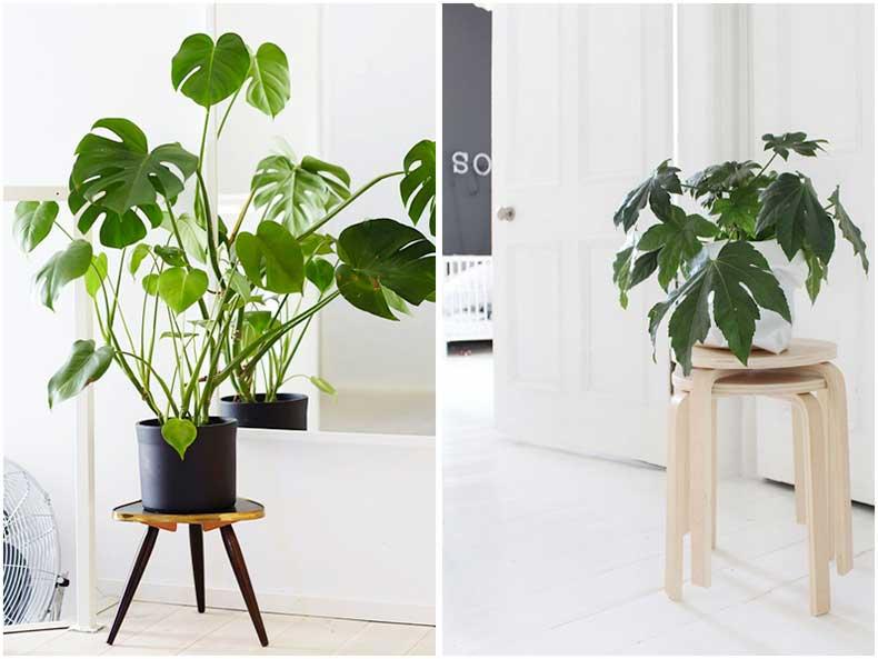 plant1_zpsshpk3m7s