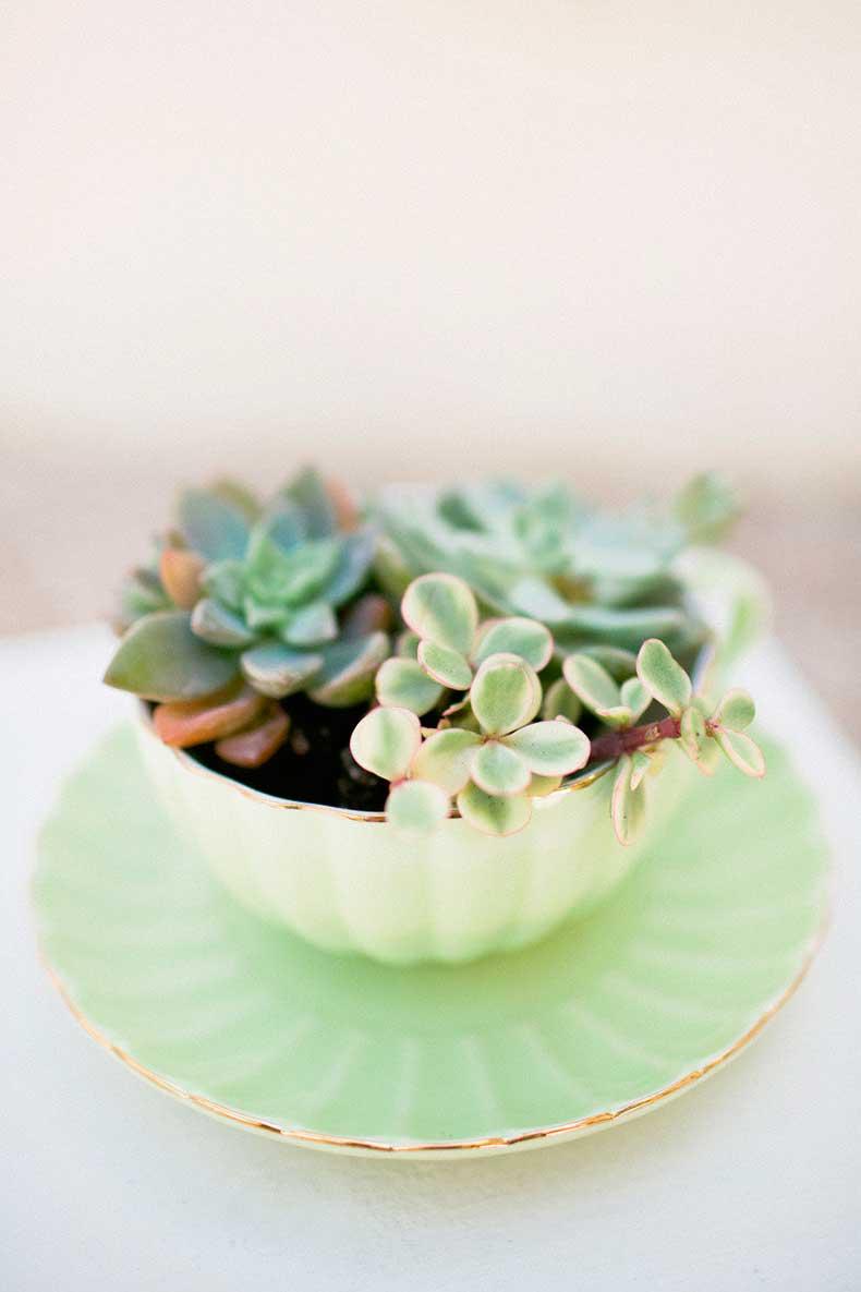 Style-Succulents