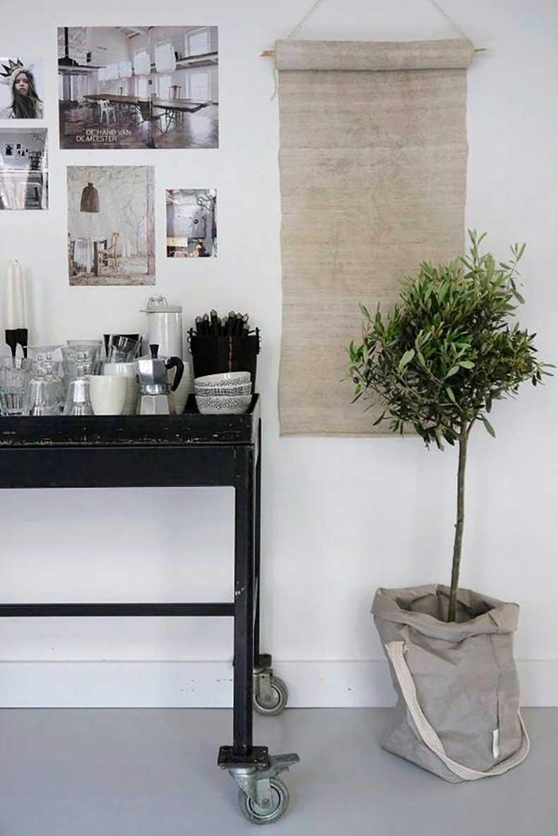 olivetree6