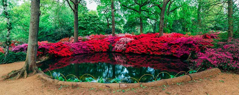 Isabella-Plantation-Richmond-Park-2