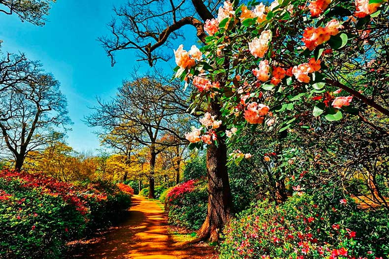 Isabella-Plantation-Richmond-Park