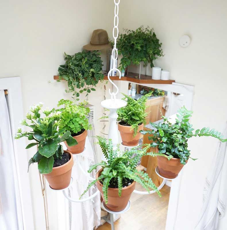 I-began-decorating-plants-clippings-when-I-decided-I