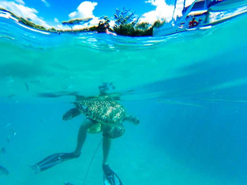 Calabaza-Barbados_-7