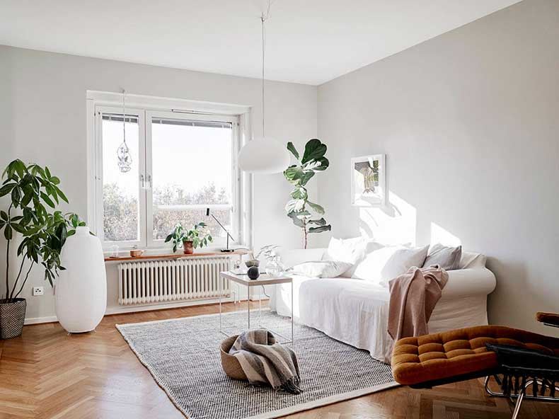 White-lounge-room-fiddle-leaf-fig