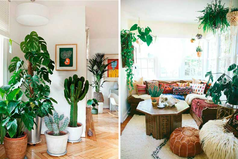 Boho_decor_cactus_plants
