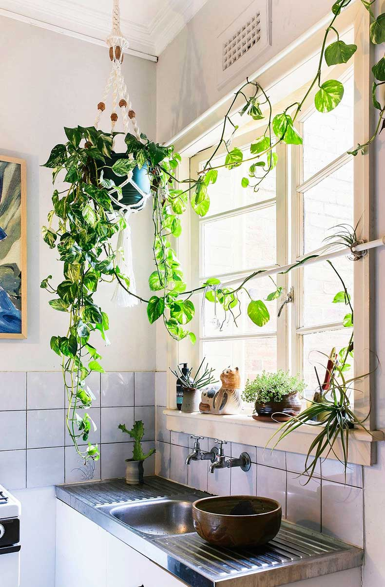 Hanging-plant-over-sink