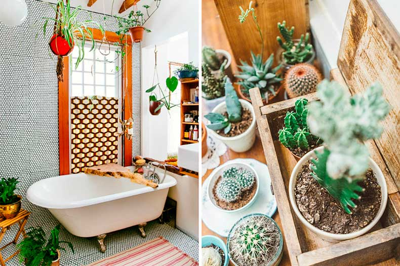 Hanging_plants_bathroom-1