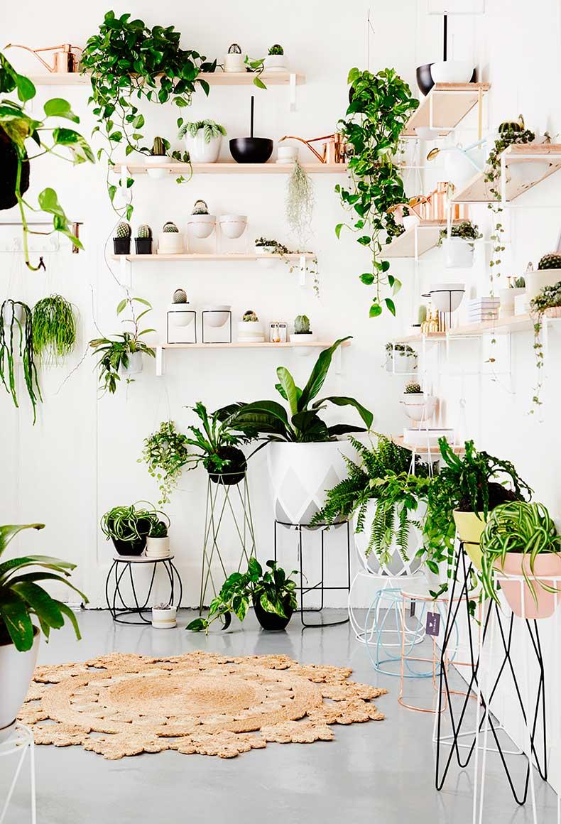House_plants_jute_rug