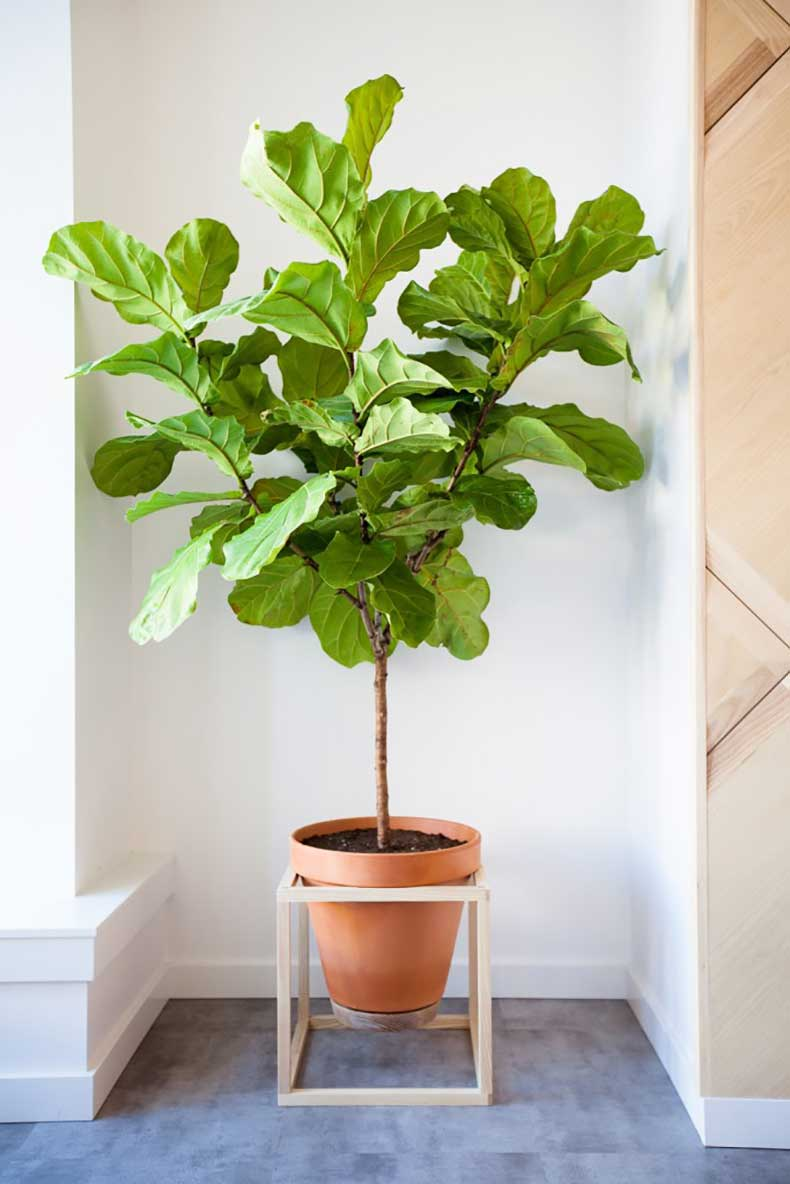 how-to-pick-the-perfect-house-plant-the-everygirl-4