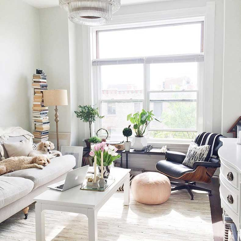 how-to-pick-the-perfect-house-plant-the-everygirl-7