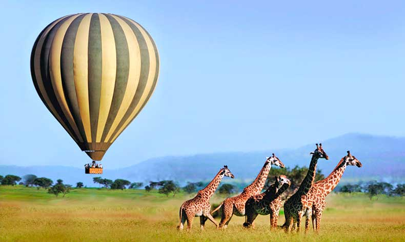 soaring-above-giraffes-copy