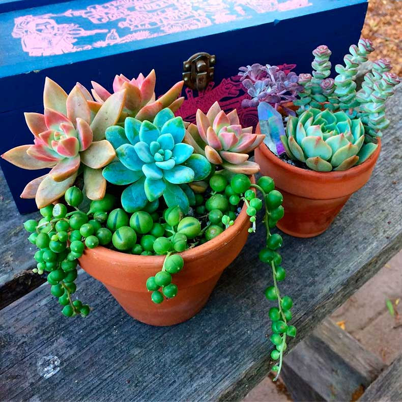 colorfulcacti