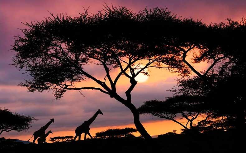serengeti-national-park-tanzania-wrldsnst1122